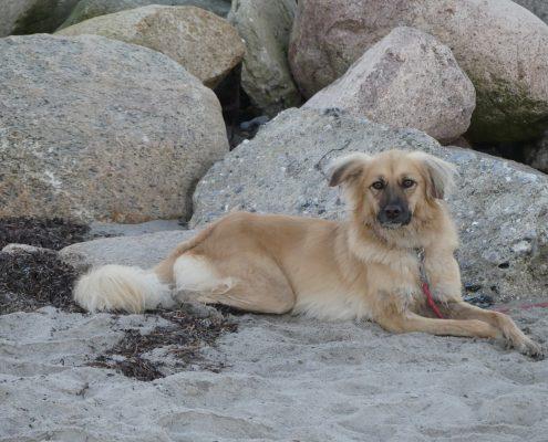 Lilly - Hund nach Südafrika